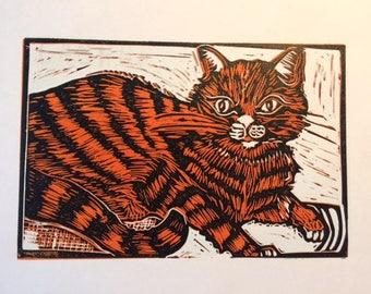 Jasper, the Library Cat