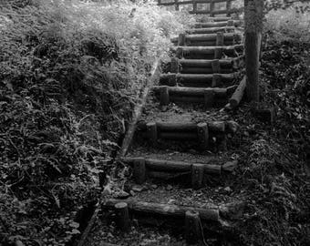 Kumano Kodo Pilgrimage Steps - Takahara to Hongu