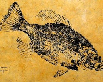 GYOTAKU fish Rubbing Crappie II  8.5 X 11 quality Art Print Panfish Cottage Decor by artist Barry Singer