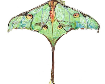 Luna Moth Butterfly Open Edition // home decor// Art Print// butterfly art // contemporary design  5x7, 8x10, 11x14, or 13x19