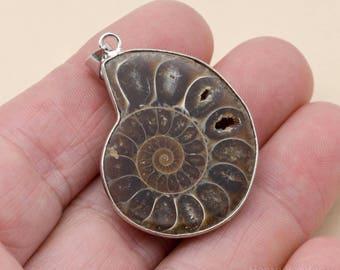 Ammonite Pendant, 30mm - 35mm, Ammonite Fossil, Silver Bail, Pendant -P134