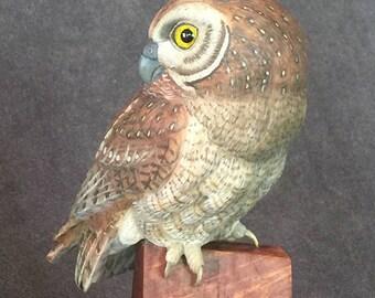 Life Sized Elf Owl