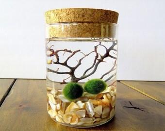 Marimo Moss Ball Terrarium Corked Jar, Customizable, Several Colors, Closed Marimo Terrarium