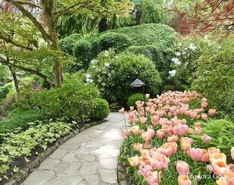 Tranquil Garden Photography, Botanical Photography, Garden Photography, Flower Photography, Travel Photography