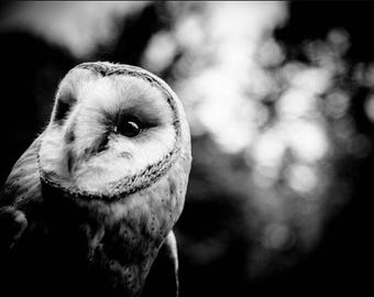 Owl Art Photograph - Black and White Photography - Nature Wall Decor - Monochrome Fine Art - Animal Photography