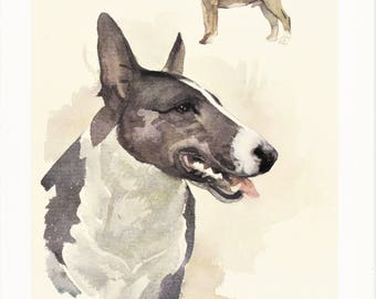 Bull Terrier British dog breed vintage print illustration gift for dog lover owner portrait by Willy E. Bär 8x11.5 inches
