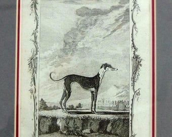 "A Bell Etching Common Gre-Hound Greyhound Plate XXVIII 10 3/8"" x 12 3/8"""