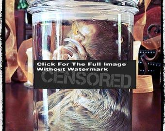 Preserved Gopher in jar