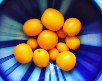 Kumquats/Citrus in Handmade Blue Ceramic Bowl