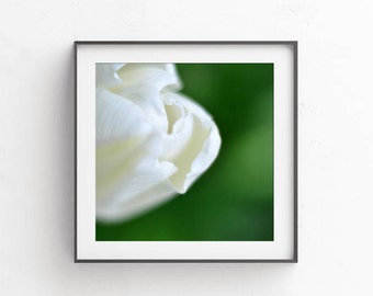 Printable art, Wall pictures, Nursery pictures, Abstract photography, Digital download art, Commercial use, White green tulip, nursery decor