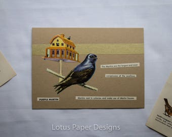 Handmade Blank Greeting Card (Folded A6) - Purple Martin - Golden Guide to BIRDS