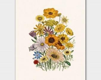 "Daisy Art Floral Print, Yellow Flower Art (Cottage House Decor, Victorian Botanical Illustration) ""Daisies"""