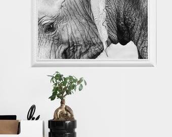 Elephant photography elephant artwork printable - digital download instant art print - minimalist girly classic trendy chic nature
