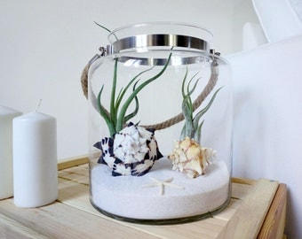 Medusea Air Plant Aquarium Kit | Tillandsia Terrarium | Coastal Home Decor