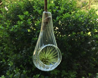 Scalloped Glass Hanging Terrarium