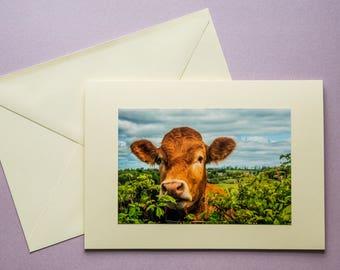MOOOOOO! - all occasion greeting card