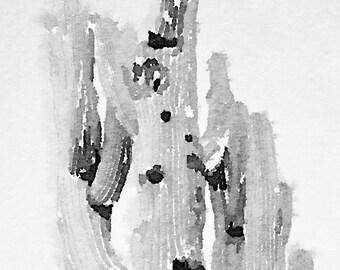 Black and White Saguaro