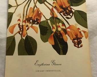 Erythrina Glauca (Swamp Immortelle) Bernard & Harriet Pertchik 1951 Print from Flowering Trees of the Caribbean Alcoa Steamship