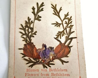 antique french religious herbarium card, pressed flowers from Bethlehem