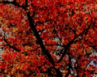 Alabama Landscape Photography Autumn Fall Foliage