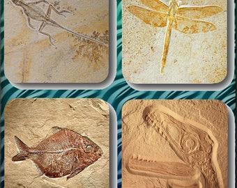 Fossil coasters, fossils, evolution,gift,fun,present.