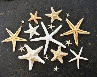 "Starfish Sampler: 14 Starfish Set 1/2""-4"" Beach Wedding Decor Crafts Nautical"