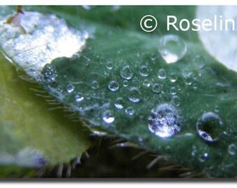 Postcard. Water drops.