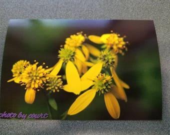 Soft yellow flower photograph