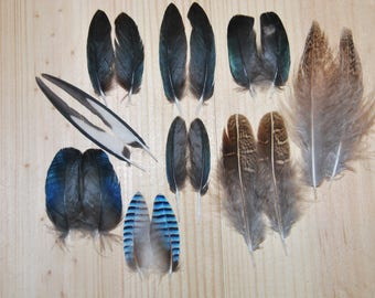 IP1 - Lot/Set of feathers/plumes natural of Pie/Jay oak/Partridge gray-black/white/metallic/blue/green-3/5cms - 9paires.
