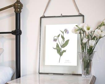 Comfrey, Botanical Wildflower Watercolour, Art Print