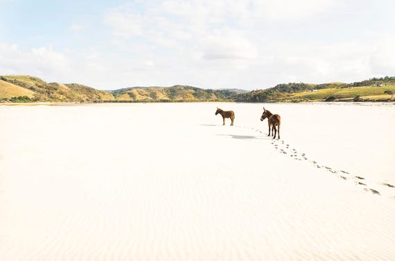 DONKEY TRACKS. South Africa, Donkeys on Beach, Landscape Print, Beach Print, Travel Photography, Limited Edition