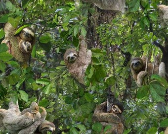 "Sloth fabric by Elizabeths Studios, by the half yard, 43-44"" wide, 100% cotton - sloths in trees - novelty fabric - animal fabric"
