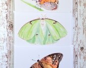 Butterfly Cards, Set of 3 Blank Cards with White Envelopes, Watercolor Butterfly Art, Luna Moth, Painted Lady Butterfly, Assorted Cards