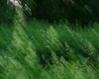 Abstract photography. Abstract art. Nature photo. Vegetation.