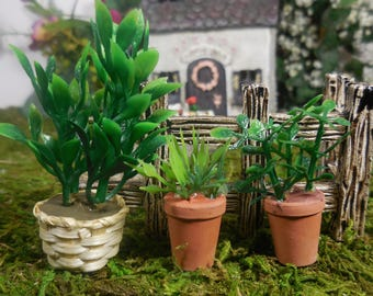 Mini Garden Plants, Miniature House Plants, Tiny Fairy Plant, Mini Plant  Fairy Gardens