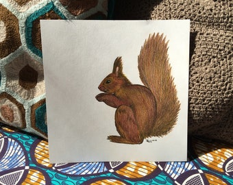 Brown Squirell - handdrawn illustration - colored pencild
