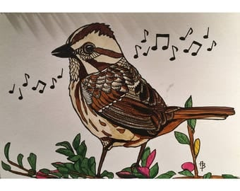 Song Sparrow Print