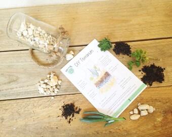 DIY Terrarium Kit, Glass Lantern succulent Terrarium, Living Succulent Gift, Green Thumb Gift, Birthday gift, indoors plant, rustic terrariu