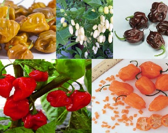 Habanero Chilli Seeds (5 variety)