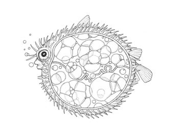 Anatomy of a Blowfish