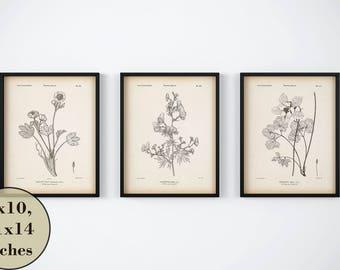 Set of 3 botanical prints, Vintage flower print, Instant download printable art, Aquilegia, Columbine, Wolfsbane, Aconite, Ranunculus print