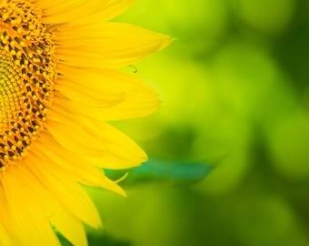 """Sunflower Photo, Sunflower Art, Metal Print, """"Sunflower Face"""""""