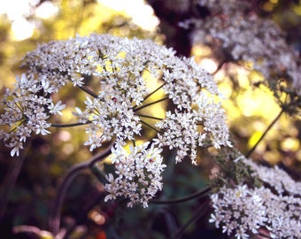 Summer Blooms | Flowers | Nature | Bokeh