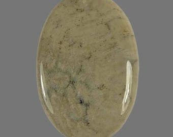 34.20 Cts Fossil Coral Oval Shape Cabochon 1 Piece 36X24X5 MM Size Loose Gemstone | G2588