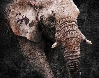 Elephant Portrait, Living Room Decor, Elephant lovers, Elephant Photography, Elephant Room Decor, Elephant Art Print, Elephant Wall Art