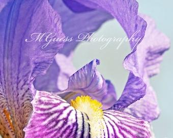 Purple Iris // Wall Art Decor