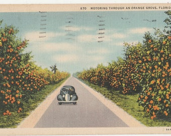 Antique Vintage Postcard Motoring Through an Orange Grove FL Florida Linen Citrus Grove Classic 1937