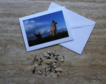 Blank Cards, FREE SHIPPING, Unique German Shepherd Photo Cards, River Walk