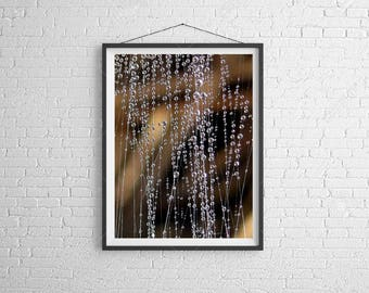 Nature photo marco, water drop photo, macro water drop, nature photography, up close photo, waterfall, photo with story, poetry of nature