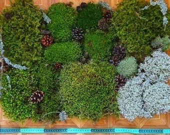 Moss Super Set,1 kg for Terrarium,Florarium,Wreaths creation,holidays decorating,natural moss,landscaping design,interior decoration,topiary